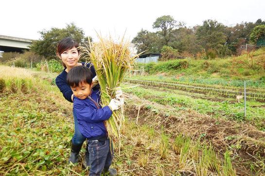 稲刈り体験イベント