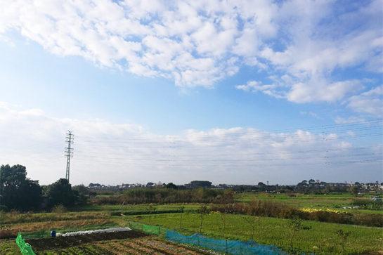 大収穫祭 朝