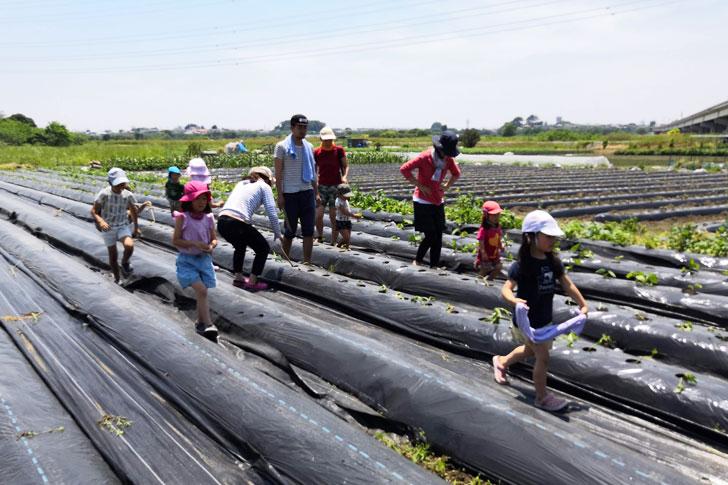 2019.05.26 オーナー向け田植えイベント サツマイモ植え付け体験